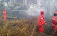 Soal Karhutla, Jokowi Jangan Mengulang Kesalahan Soeharto